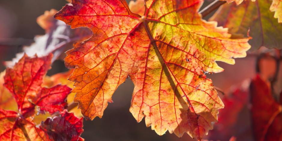 fall, energy audit, green team LI, ny, energy efficiency